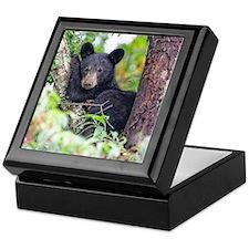 Bear Cub relaxing in Tree Keepsake Box