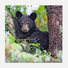 Bear Cub relaxing in Tree Tile Coaster