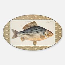 Vintage Carp Freshwater Fish Drawing Decal
