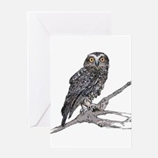 Southern Boobook Owl Greeting Cards
