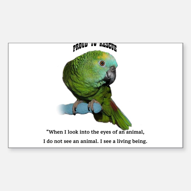 Cute Amazon parrot Decal