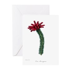 Paxton's Erica Murrayana Greeting Cards