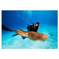 Palau, Micronesia. Diver With A Camera Swims Near Framed Print