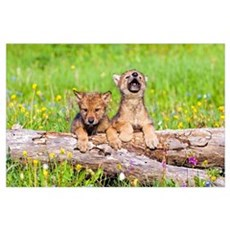 Wolf Cubs On Log Poster