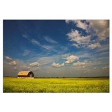 Alberta, Canada; An Old Barn In A Field Framed Print