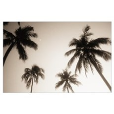 Palm trees silhouetted against evening sky, Small  Poster