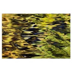 Oak And Maple Trees Reflections In Water Poster