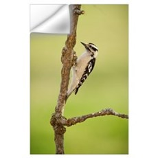 Female downy woodpecker on a tree branch, Ohio Uni Wall Decal