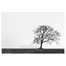 Oregon, Willamette Valley, single Oak tree in fog  Poster