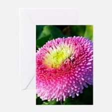 Pink Flower Photograph Greeting Cards