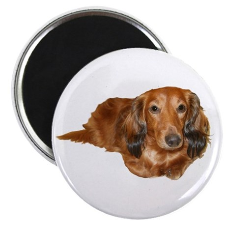 Long Hair Red Dachshund Magnet