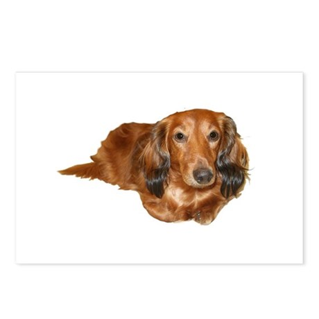 Long Hair Red Dachshund Postcards (Package of 8)
