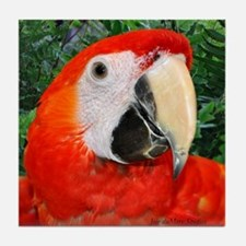 Cute Scarlet macaw Tile Coaster