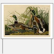 Audubon Mallard duck Bird Vintage Print Yard Sign
