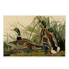 Audubon Mallard duck Bird Vintage Print Postcards