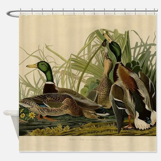 Audubon Mallard duck Bird Vintage Print Shower Cur