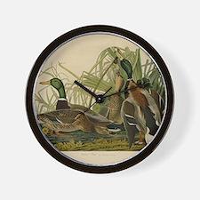 Audubon Mallard duck Bird Vintage Print Wall Clock