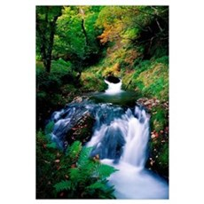 Waterfall In The Woods, Ireland Framed Print