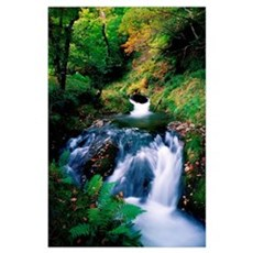 Waterfall In The Woods, Ireland Poster