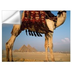 Looking Under Camel To Great Pyramids Of Giza Wall Decal
