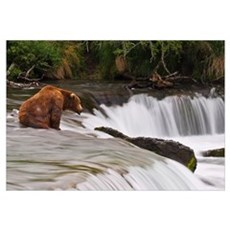 Brown Bear Patiently Sits At Brooks Falls For A Sa Framed Print