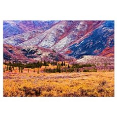 Fall Colours In Ogilvie Mountains, Tombstone Terri Canvas Art