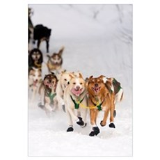 Quinn Iten Lead Dogs Running On Long Lake, Alaska Canvas Art