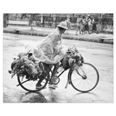 Burma, Yangon, Man riding bicycle carrying chicken Framed Print