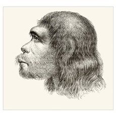 Head Of A Neanderthal Man, A 19th Century Reconstr Poster