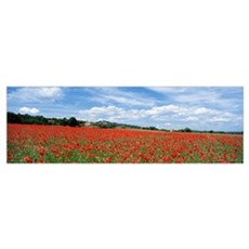 Looking Across Field Of Poppies To Small Village I Poster