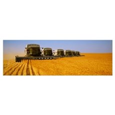 Six Gleaner combines harvest wheat in tandem Poster