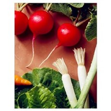Radishes, green onions, romaine lettuce leaf and t Poster