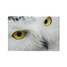snowy owl Magnets
