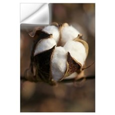 Closeup of a partially open cotton boll, Mississip Wall Decal