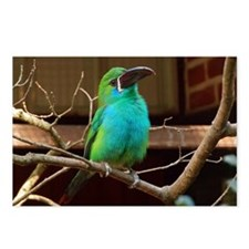 Perched Green Bird Postcards (Package of 8)