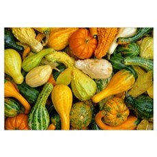 Mixed gourds and Autumn leaves, Northern Kentucky Poster