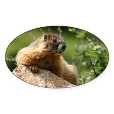 Marmot Oval Decal