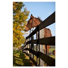 Horse By Farm Fence In Autumn, Caledon, Ontario, C Poster