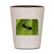 Shadow of the ant Shot Glass