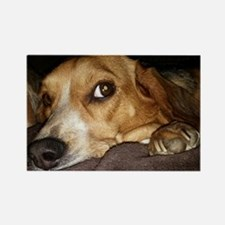Beagle ~ One Love Rectangle Magnet