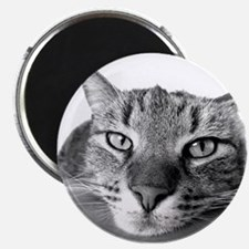 Black and White Cat Magnets
