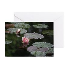 Lily pads Greeting Cards