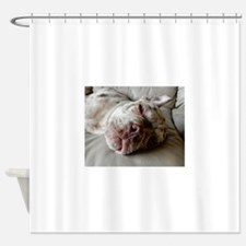 Olde English Bulldogge Shower Curtain