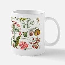 Botanical Illustrations - Larousse Plan Small Mugs