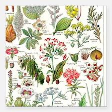 "Botanical Illustrations  Square Car Magnet 3"" x 3"""