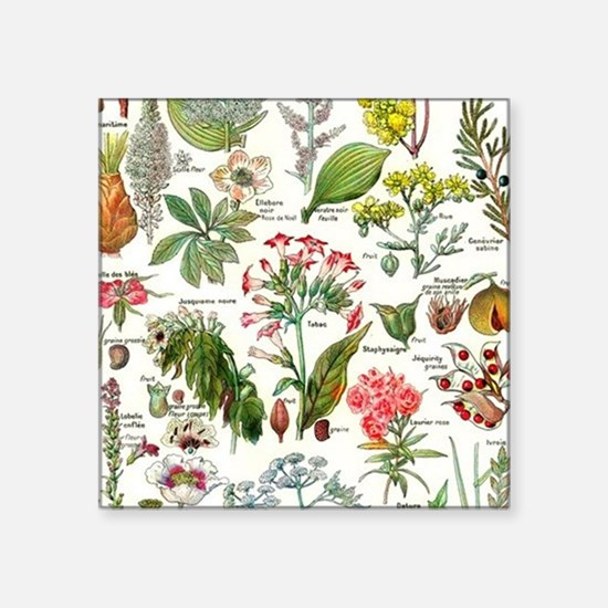"Botanical Illustrations - L Square Sticker 3"" x 3"""