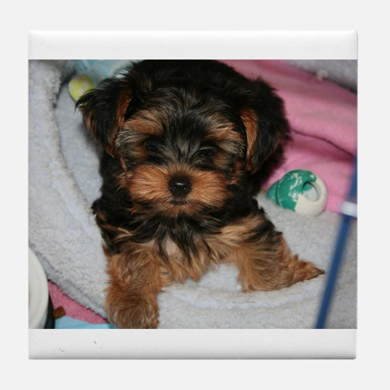 Yorkie Puppy Tile Coaster
