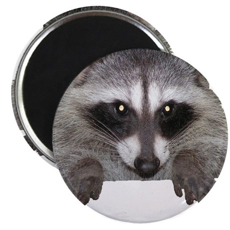 Raccoon and Tracks Magnet