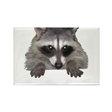 Raccoon and Tracks Rectangle Magnet