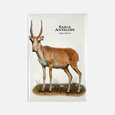 Saiga Antelope Rectangle Magnet